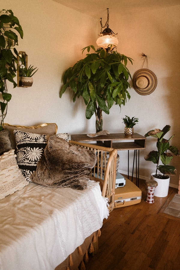 plants and wooden furniture